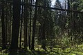 Forest between Olgino and Lisy Nos, 2nd of May 2020-4.jpg
