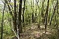 Forest in Mt.Nabeashi 05.jpg
