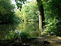 Forty Hall Park fishing lake, Enfield.jpg