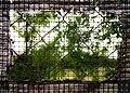 Framed (20972496755).jpg