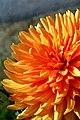 France-001284 - St-Malo Bloom (15020368170).jpg