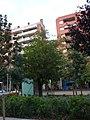 Freixe americà de la plaça Gal·la Placídia P1510487.jpg