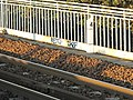 French railways hectomer stone 4.jpg