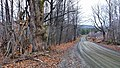 French road and old willow trees - panoramio.jpg