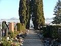 Friedhofsthuia - panoramio.jpg