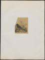 Fringilla pusilla - 1700-1880 - Print - Iconographia Zoologica - Special Collections University of Amsterdam - UBA01 IZ16000039.tif