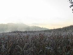 Frost (temperature).jpg