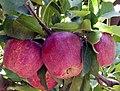 Fruta - panoramio.jpg