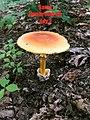 Fungi - Daniel Boone National Forest - Social 10.jpg
