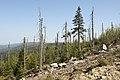 Góry Izerskie - ślady klęski ekologicznej - panoramio.jpg