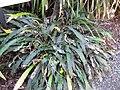 Gardenology.org-IMG 0787 rbgs10dec.jpg
