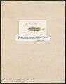 Gasterosteus pungitius var. B occidentalis - 1817-1841 - Print - Iconographia Zoologica - Special Collections University of Amsterdam - UBA01 IZ12900011.tif