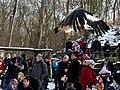 Geierschau im Wildpark Bad Mergentheim. 03.jpg