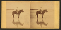 Girl on horseback in the beach, from Robert N. Dennis collection of stereoscopic views 2.png