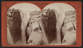 Glen's Falls. The gulf from below, by Stoddard, Seneca Ray, 1844-1917 , 1844-1917.png