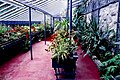 Glenveagh National Park - Castle greenhouse interior - geograph.org.uk - 1330741.jpg