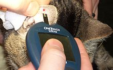 Diabetic Cat Dry Food Tiki Site Www Felinediabetes Com
