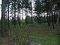 Gmina Iłowo-Osada, Poland - panoramio (3).jpg
