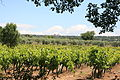 Gordes, vignes et oliviers, par JM Rosier.JPG