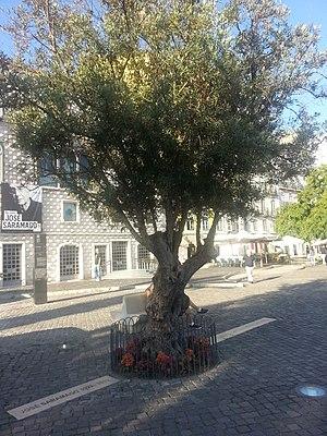 José Saramago - José Saramago's ashes burial place