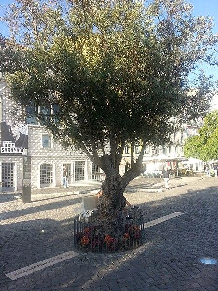 File:Grave Memorial of José Saramago 04.jpg