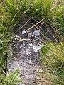 Gravestone near Inninmore - geograph.org.uk - 880116.jpg