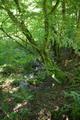 Grebenau Grebenau NR 165502 Schwarzenbachsgrund Schwarzenbach Tributary Spring.png
