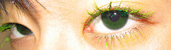 definition of eyelash