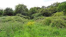 Gutteridge Wood 5.JPG