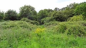 Gutteridge Wood and Meadows - Image: Gutteridge Wood 5