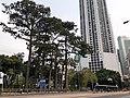 HK CWB 銅鑼灣 Causeway Bay 高士威道 Causeway Road sidewalk trees Victoria Park n October 2019 SS2.jpg
