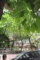 HK Sai Ying Pun 第三街 3rd Street 廣豐里 Kwong Fung Lane green leaves view Third Street Playground June 2017 IX1.jpg