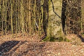 Haltern am See, Naturpark Hohe Mark -- 2018 -- 1305.jpg