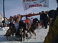 Hans Gatt poses with dogs at Iditarod finish (4440181652).jpg