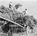 Harvesting at Mount Barton, Devon, England, 1942 D10317.jpg