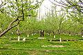 Hashopi Gardens , Shigar.JPG