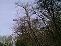 Heiloo - panoramio - Heiloo (65).jpg