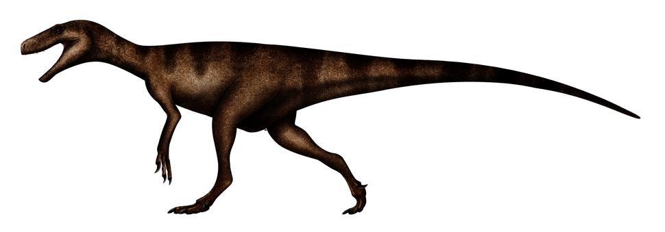 Herresaurus