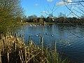 Hillfield Park lake - geograph.org.uk - 717587.jpg