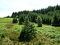 Hillside in Kielder Forest - geograph.org.uk - 204541.jpg