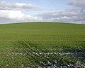 Hinderset Hill, Burstwick - geograph.org.uk - 319601.jpg
