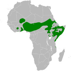Hirundo aethiopica distribution map.png