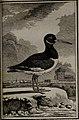 Histoire naturelle des oiseaux (1781) (14564586688).jpg