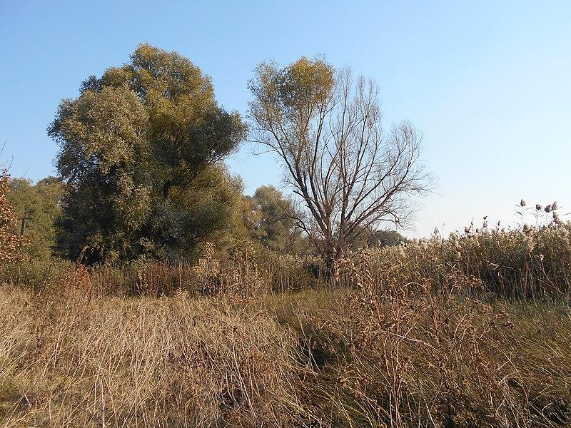 File:Hlyboka Dolyna, Poltavs'ka oblast, Ukraine - panoramio (5).jpg