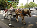 Horse-drawn carriage in Charlotte, North Carolina (19 August 2006).jpg