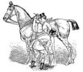 Horsemanship for Women 109.png
