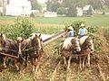 Horses at work 04.jpg