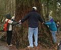 How Big Is The Tree? (5376604126).jpg