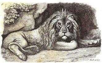 Samuel Howitt - Lion resting (copper engraving, 1810)