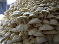 Hundreds of mushrooms (10843702823).jpg